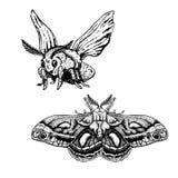 Insieme disegnato a mano del lepidottero Schizzi realistici Illustrazione di vettore fotografia stock libera da diritti
