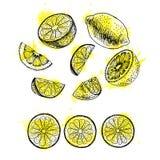 Insieme disegnato a mano dell'acquerello del limone Schizzo di vettore royalty illustrazione gratis