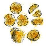 Insieme disegnato a mano dell'acquerello dell'arancia Schizzo di vettore illustrazione vettoriale