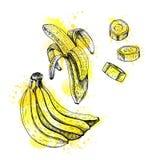 Insieme disegnato a mano dell'acquerello della banana Schizzo di vettore royalty illustrazione gratis