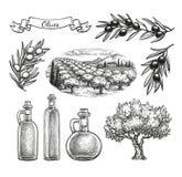 Insieme disegnato a mano dell'oliva Fotografie Stock