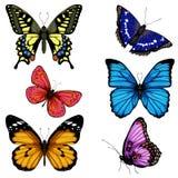 Insieme disegnato a mano della farfalla di vettore variopinto illustrazione vettoriale