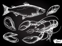 Insieme disegnato a mano della lavagna dei frutti di mare di vettore Fotografia Stock Libera da Diritti