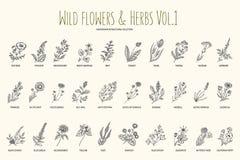 Insieme disegnato a mano delle erbe e dei fiori selvaggi Volume 1 botanica Fiori dell'annata Illustrazione d'annata di vettore royalty illustrazione gratis