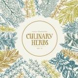 Insieme disegnato a mano delle erbe e delle spezie culinarie Vector il fondo per il menu di progettazione, imballante, le ricette Fotografia Stock Libera da Diritti