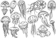 Insieme disegnato a mano delle meduse Raccolta del mare illustrazione di stock