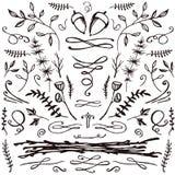 Insieme disegnato a mano di floreale e di flourishes Fotografia Stock