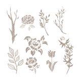 Insieme disegnato a mano di monocromio della pianta Fotografia Stock