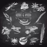 Insieme disegnato a mano di vettore con le spezie delle erbe annata Fotografia Stock