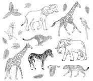 Insieme disegnato a mano di vettore degli animali africani royalty illustrazione gratis