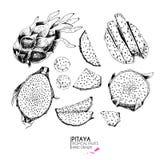Insieme disegnato a mano di vettore dei frutti esotici Pitaya di Ioslated Arte incisa Oggetti vegetariani tropicali deliziosi illustrazione vettoriale