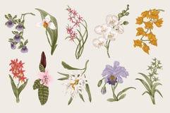 Insieme esotico dell'orchidea Illustrazione botanica dell'annata di vettore Immagini Stock