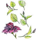 Insieme floreale dell'acquerello Immagini Stock Libere da Diritti