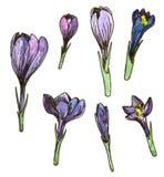 Insieme floreale dell'acquerello Fotografia Stock Libera da Diritti