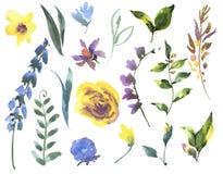 Insieme floreale dell'acquerello d'annata dei Wildflowers, foglie verdi illustrazione di stock