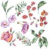Insieme floreale dell'acquerello dei fiori di estate, bacche, Wildflowers illustrazione vettoriale