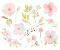 Insieme floreale dell'acquerello dei rami delle foglie e Immagini Stock