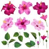 Insieme floreale dell'ibisco con i fiori, le foglie ed i rami Fiori disegnati a mano della primavera e di estate dell'acquerello  illustrazione di stock