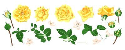 Insieme floreale di nozze Mazzo delle rose di vettore illustrazione vettoriale