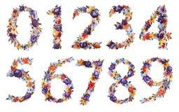 Insieme floreale di numero dell'acquerello isolato su fondo bianco illustrazione vettoriale