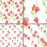 Insieme floreale senza cuciture con i fiori del tulipano Immagine Stock Libera da Diritti