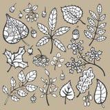 insieme Foglie di autunno decorative, bacche, ghiande Immagini Stock Libere da Diritti