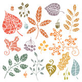 insieme Foglie di autunno decorative, bacche, ghiande Fotografia Stock
