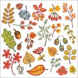 insieme Foglie di autunno decorative, bacche, ghiande Fotografia Stock Libera da Diritti