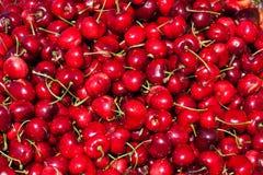 Insieme fresco delle ciliege rosse Fotografie Stock Libere da Diritti
