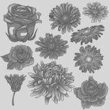Insieme grigio del fiore Fiori monocromatici isolati Fotografie Stock Libere da Diritti