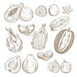 Insieme isolato esotico di schizzo della frutta tropicale illustrazione vettoriale