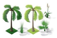 Insieme isometrico della raccolta della foresta delle piante Alberi di caduta Fotografia Stock