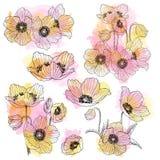 Insieme lineare del mazzo del disegno del fiore dell'anemone Pianta selvatica con i punti dell'acquerello Illustrazione incisa di Immagine Stock