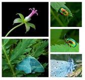 Insieme a macroistruzione della natura Fotografia Stock Libera da Diritti