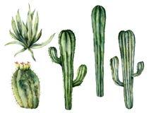 Insieme messicano dei cactus dell'acquerello Raccolta floreale dipinta a mano con i cactus del deserto, agava Illustrazione botan illustrazione vettoriale