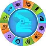 Insieme microscopico - rotella Fotografia Stock