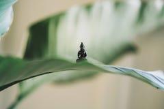 Insieme molto piccolo della statua di Buddha su una grande foglia della pianta fotografia stock libera da diritti