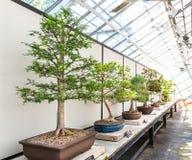 Insieme naturale dei bonsai Fotografia Stock Libera da Diritti