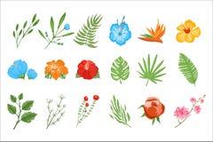 Insieme piano di vettore delle piante tropicali Fiori esotici con i petali luminosi ed i piccoli rami con le foglie Tema di botan Immagini Stock Libere da Diritti