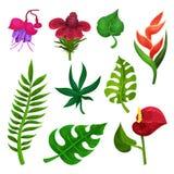 Insieme piano di vettore di vari fiori e foglie verdi esotici Tema della natura Elementi per il libro botanico, aletta di filatoi illustrazione vettoriale