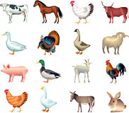 Insieme realistico della foto degli animali da allevamento Immagine Stock Libera da Diritti
