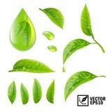 Insieme realistico di vettore degli elementi: foglie di tè e gocce di rugiada o oi illustrazione di stock
