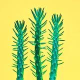 Insieme rosa di modo del cactus Progettazione della galleria di arte minimo Fotografie Stock Libere da Diritti