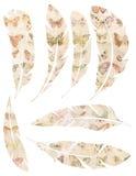 Insieme stampabile delle piume d'annata dell'acquerello grungy con progettazione della farfalla su fondo bianco Fotografia Stock