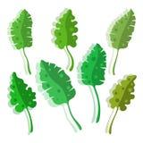 Insieme stilizzato foglie tropicali con ombra Fotografie Stock