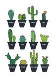Insieme sveglio del cactus Fotografia Stock