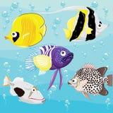 Insieme tropicale dei pesci Fotografie Stock