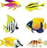 Insieme tropicale del pesce Fotografia Stock