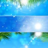 Insieme tropicale dell'insegna Fotografia Stock