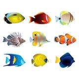 Insieme tropicale di vettore dei pesci Fotografia Stock Libera da Diritti